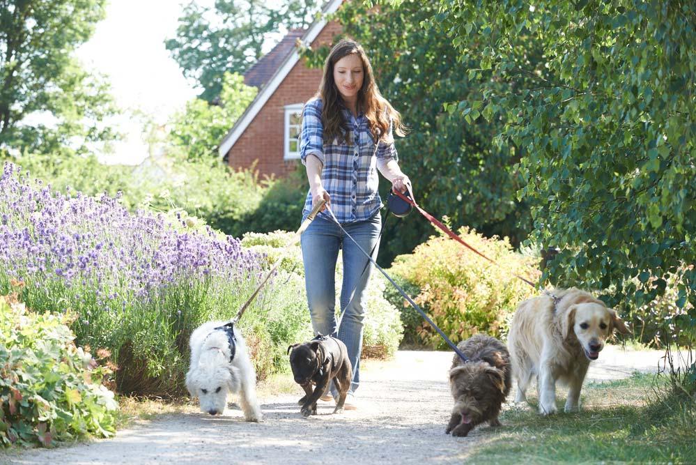Passeio com cachorros
