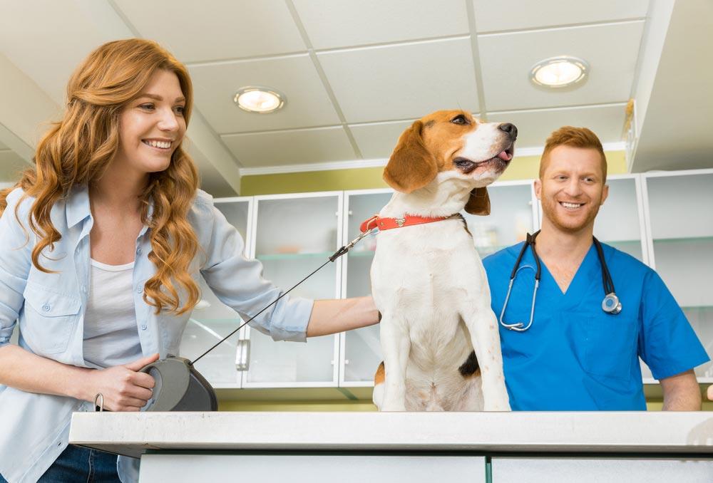 Como é a carreira de um veterinário