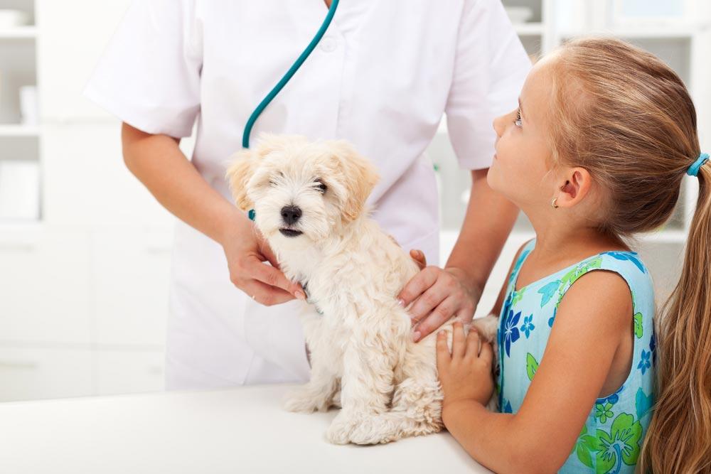Onde estudar veterinária