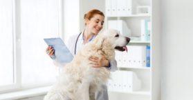 Quanto ganha um veterinário